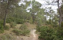 entorno1_jumilla